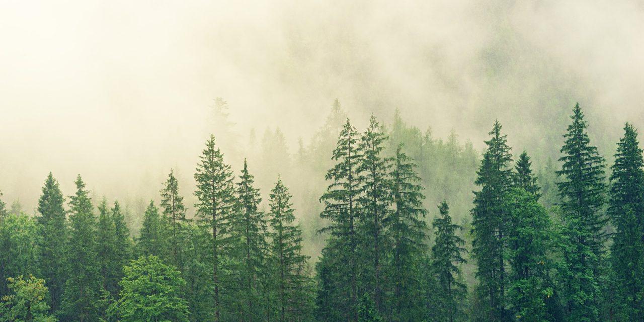 #35 – Granskogsfolk och skogslitteratur